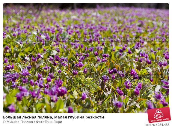 Большая лесная поляна, малая глубина резкости, фото № 284438, снято 8 мая 2008 г. (c) Михаил Павлов / Фотобанк Лори