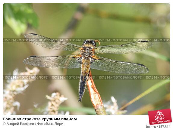 Большая стрекоза крупным планом, фото № 157314, снято 5 июня 2006 г. (c) Андрей Ерофеев / Фотобанк Лори