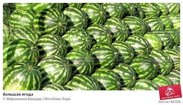Купить «Большая ягода», фото № 84578, снято 16 сентября 2007 г. (c) Мирсалихов Баходир / Фотобанк Лори