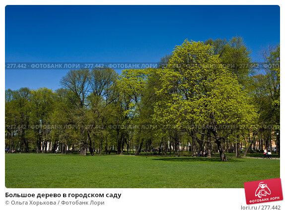Большое дерево в городском саду, фото № 277442, снято 4 мая 2008 г. (c) Ольга Хорькова / Фотобанк Лори