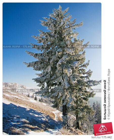 Купить «Большой зимний иней», фото № 175442, снято 14 января 2006 г. (c) Юрий Брыкайло / Фотобанк Лори