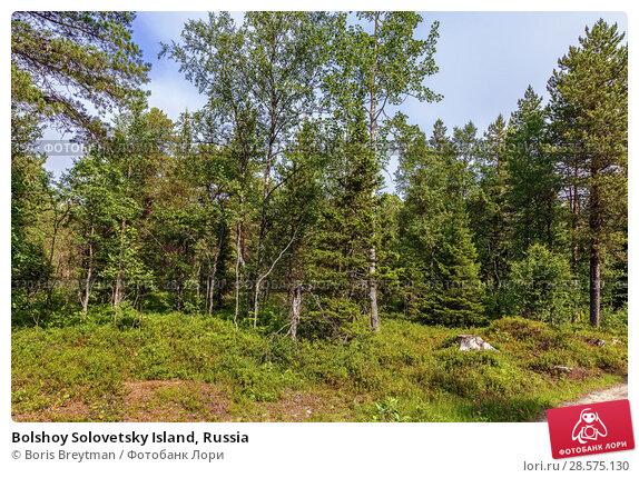 Купить «Bolshoy Solovetsky Island, Russia», фото № 28575130, снято 27 июля 2017 г. (c) Boris Breytman / Фотобанк Лори