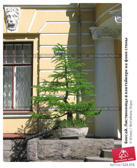 Купить «Бонсай. Лиственница в контейнере на фоне стены», фото № 324418, снято 17 мая 2008 г. (c) Морковкин Терентий / Фотобанк Лори