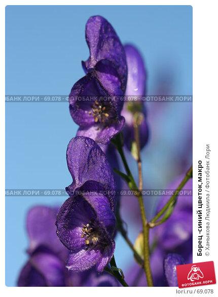 Купить «Борец -синий цветок,макро», фото № 69078, снято 5 августа 2007 г. (c) Ханыкова Людмила / Фотобанк Лори