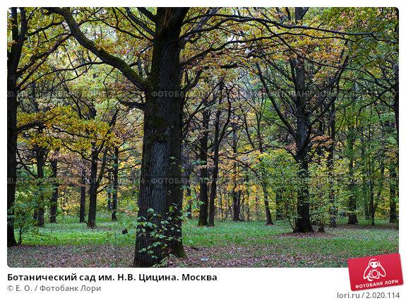 Ботанический сад им. Н.В. Цицина. Москва; фото № 2020114 ...: http://lori.ru/2020114