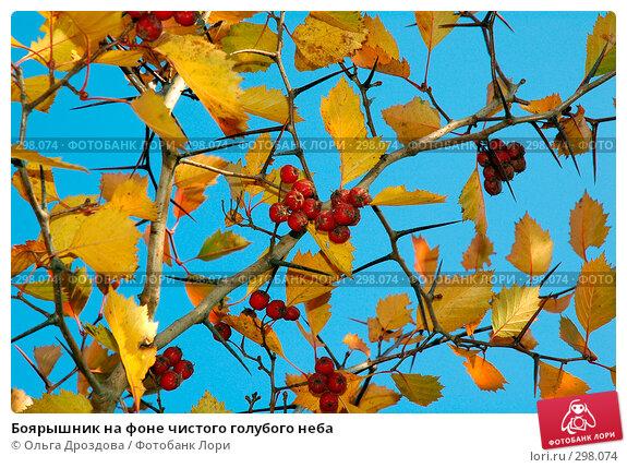 Боярышник на фоне чистого голубого неба, фото № 298074, снято 9 октября 2005 г. (c) Ольга Дроздова / Фотобанк Лори