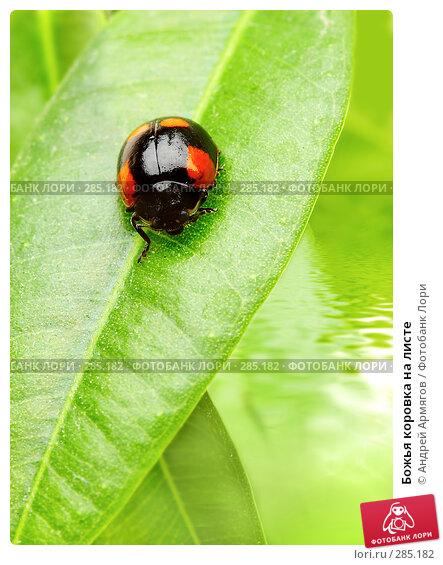 Божья коровка на листе, фото № 285182, снято 2 апреля 2007 г. (c) Андрей Армягов / Фотобанк Лори