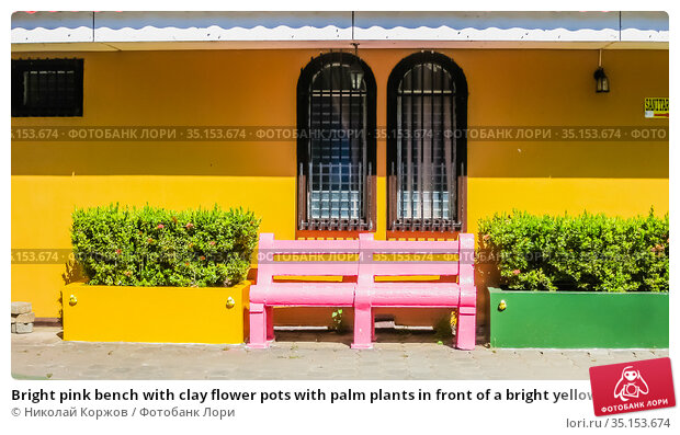 Bright pink bench with clay flower pots with palm plants in front of a bright yellow wall. Spanish colonial architecture and exterior design concept, sunny day. Granada, Nicaragua. Стоковое фото, фотограф Николай Коржов / Фотобанк Лори