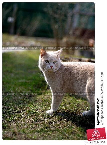 Британский кот, фото № 214906, снято 20 апреля 2004 г. (c) Морозова Татьяна / Фотобанк Лори