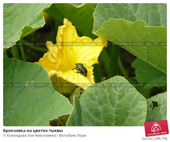 Купить «Бронзовка на цветке тыквы», фото № 295778, снято 5 августа 2005 г. (c) Комоедова Зоя Николаевна / Фотобанк Лори