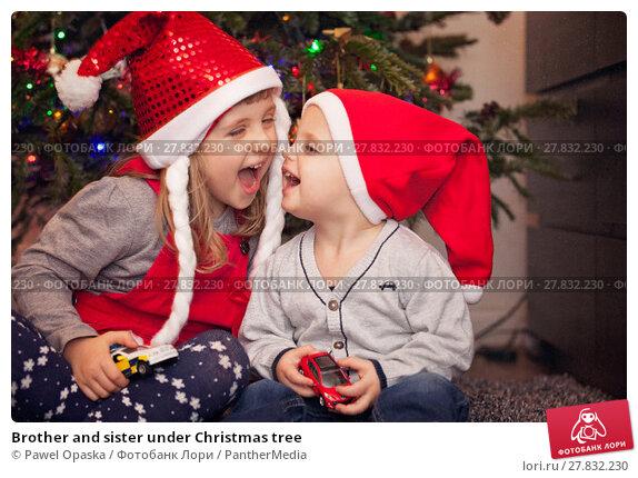 Купить «Brother and sister under Christmas tree», фото № 27832230, снято 18 октября 2018 г. (c) PantherMedia / Фотобанк Лори