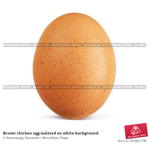 Brown chicken egg isolated on white background. Стоковое фото, фотограф Александр Лычагин / Фотобанк Лори