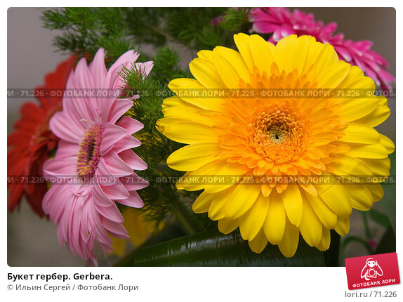 Букет гербер. Gerbera., фото № 71226, снято 10 августа 2007 г. (c) Ильин Сергей / Фотобанк Лори
