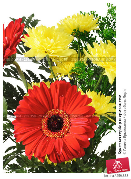 Купить «Букет из гербер и хризантем», фото № 259358, снято 19 апреля 2008 г. (c) Галина Ермолаева / Фотобанк Лори