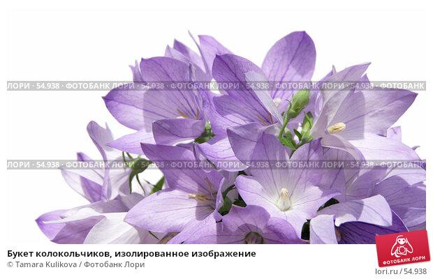 Купить «Букет колокольчиков, изолированное изображение», фото № 54938, снято 23 июня 2007 г. (c) Tamara Kulikova / Фотобанк Лори