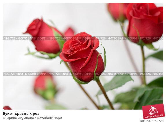 Букет красных роз, фото № 192726, снято 3 января 2008 г. (c) Ирина Игумнова / Фотобанк Лори