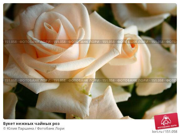 Купить «Букет нежных чайных роз», фото № 151058, снято 11 сентября 2007 г. (c) Юлия Паршина / Фотобанк Лори