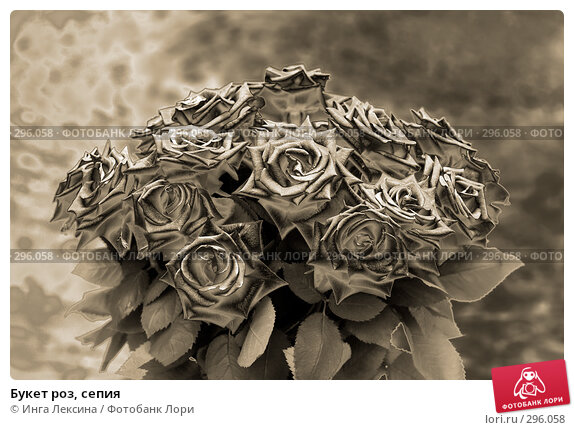 Букет роз, сепия, фото № 296058, снято 24 июля 2017 г. (c) Инга Лексина / Фотобанк Лори