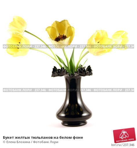 Букет желтых тюльпанов на белом фоне, фото № 237346, снято 8 мая 2007 г. (c) Елена Блохина / Фотобанк Лори