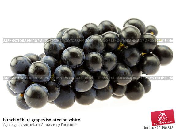 Купить «bunch of blue grapes isolated on white», фото № 20190818, снято 3 апреля 2010 г. (c) easy Fotostock / Фотобанк Лори