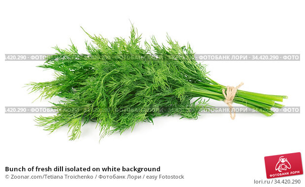 Bunch of fresh dill isolated on white background. Стоковое фото, фотограф Zoonar.com/Tetiana Troichenko / easy Fotostock / Фотобанк Лори