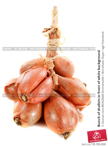 Bunch of shallots in front of white background. Стоковое фото, фотограф Zoonar.com/BONZAMI Emmanuelle / age Fotostock / Фотобанк Лори