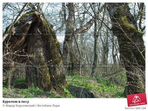 Бурелом в лесу, фото № 243134, снято 4 апреля 2008 г. (c) Федор Королевский / Фотобанк Лори