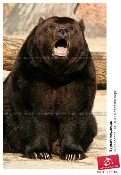 Бурый медведь, фото № 46402, снято 31 марта 2007 г. (c) Морозова Татьяна / Фотобанк Лори