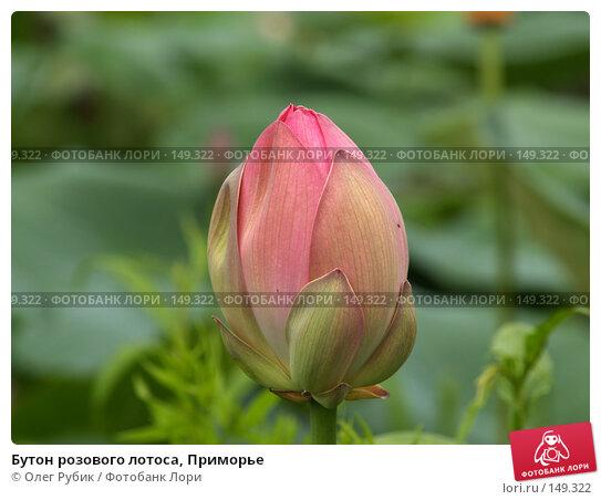 Бутон розового лотоса, Приморье, фото № 149322, снято 4 августа 2007 г. (c) Олег Рубик / Фотобанк Лори