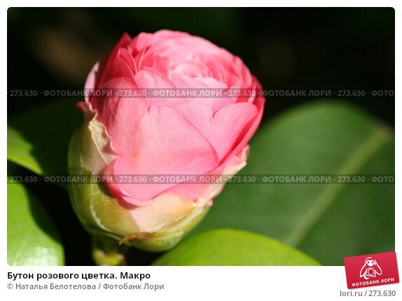 Бутон розового цветка. Макро, фото № 273630, снято 3 мая 2008 г. (c) Наталья Белотелова / Фотобанк Лори