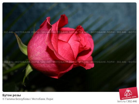 Бутон розы, фото № 302446, снято 25 мая 2008 г. (c) Галина Беззубова / Фотобанк Лори