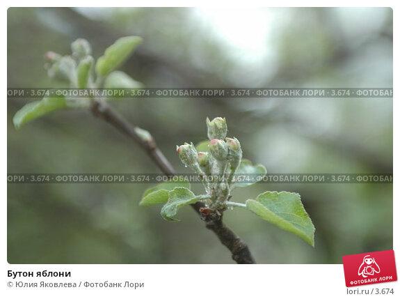 Бутон яблони, фото № 3674, снято 16 мая 2006 г. (c) Юлия Яковлева / Фотобанк Лори