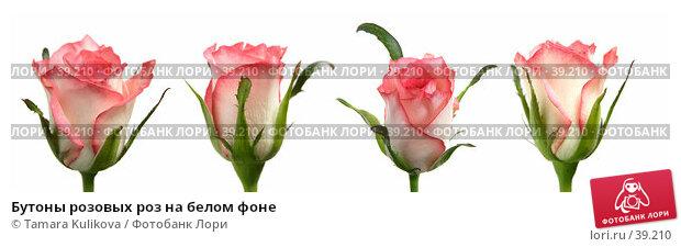 Купить «Бутоны розовых роз на белом фоне», фото № 39210, снято 27 апреля 2018 г. (c) Tamara Kulikova / Фотобанк Лори