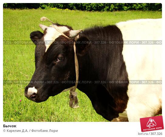 Купить «Бычок», фото № 307326, снято 31 мая 2008 г. (c) Карелин Д.А. / Фотобанк Лори
