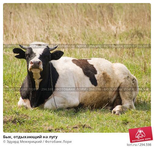 Купить «Бык, отдыхающий на лугу», фото № 294598, снято 2 мая 2008 г. (c) Эдуард Межерицкий / Фотобанк Лори