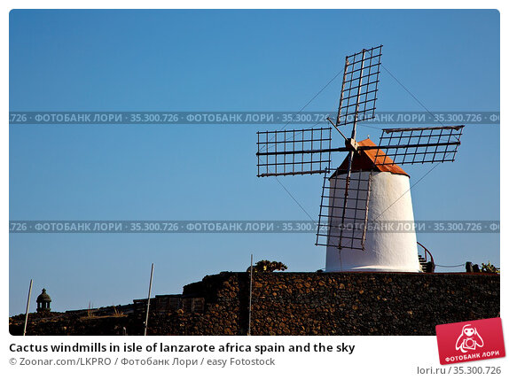 Cactus windmills in isle of lanzarote africa spain and the sky. Стоковое фото, фотограф Zoonar.com/LKPRO / easy Fotostock / Фотобанк Лори