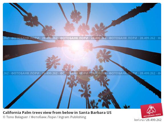 Купить «California Palm trees view from below in Santa Barbara US», фото № 28499262, снято 23 апреля 2013 г. (c) Ingram Publishing / Фотобанк Лори