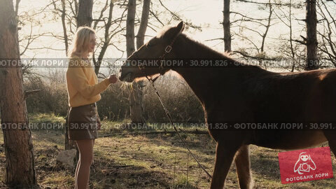 Calm beautiful horse is nibbling the grass in the meadow with bright sun rays slow motion. Стоковое видео, видеограф Denis Mishchenko / Фотобанк Лори