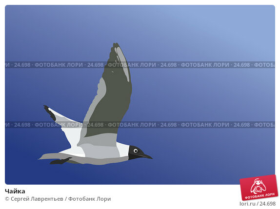 Чайка, иллюстрация № 24698 (c) Сергей Лаврентьев / Фотобанк Лори