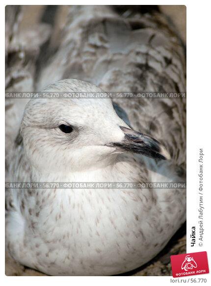 Купить «Чайка», фото № 56770, снято 20 мая 2007 г. (c) Андрей Лабутин / Фотобанк Лори