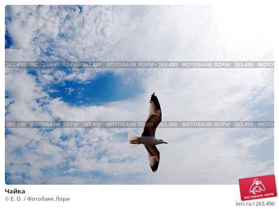 Купить «Чайка», фото № 263490, снято 25 апреля 2008 г. (c) Екатерина Овсянникова / Фотобанк Лори