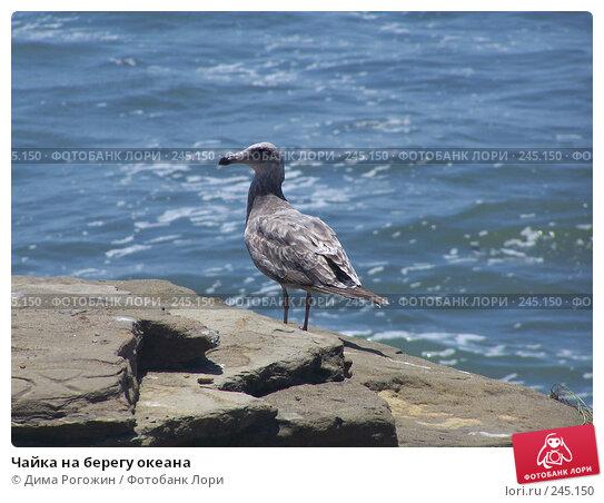 Чайка на берегу океана, фото № 245150, снято 12 июня 2006 г. (c) Дима Рогожин / Фотобанк Лори