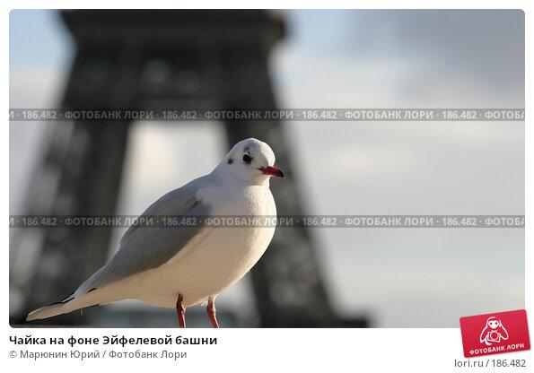 Чайка на фоне Эйфелевой башни, фото № 186482, снято 11 декабря 2007 г. (c) Марюнин Юрий / Фотобанк Лори