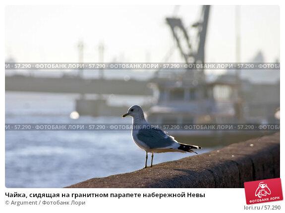 Чайка, сидящая на гранитном парапете набережной Невы, фото № 57290, снято 1 ноября 2005 г. (c) Argument / Фотобанк Лори