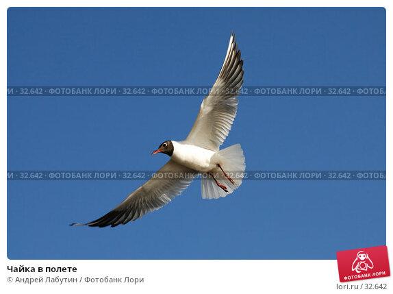 Чайка в полете, фото № 32642, снято 14 апреля 2007 г. (c) Андрей Лабутин / Фотобанк Лори