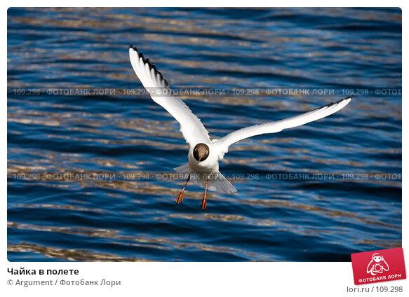 Чайка в полете, фото № 109298, снято 12 апреля 2007 г. (c) Argument / Фотобанк Лори