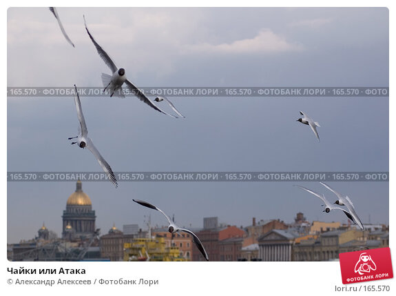 Чайки или Атака, эксклюзивное фото № 165570, снято 17 апреля 2007 г. (c) Александр Алексеев / Фотобанк Лори