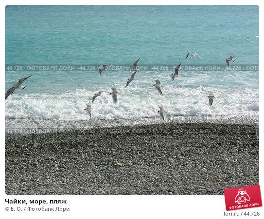Чайки, море, пляж, фото № 44726, снято 5 марта 2005 г. (c) Екатерина Овсянникова / Фотобанк Лори