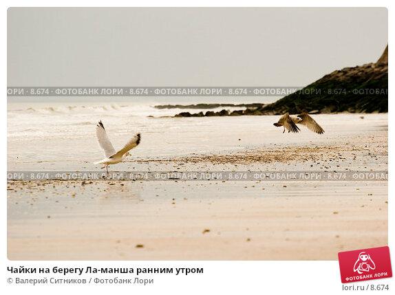 Чайки на берегу Ла-манша ранним утром, фото № 8674, снято 26 октября 2005 г. (c) Валерий Ситников / Фотобанк Лори