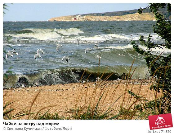 Чайки на ветру над морем, фото № 71870, снято 20 августа 2017 г. (c) Светлана Кучинская / Фотобанк Лори